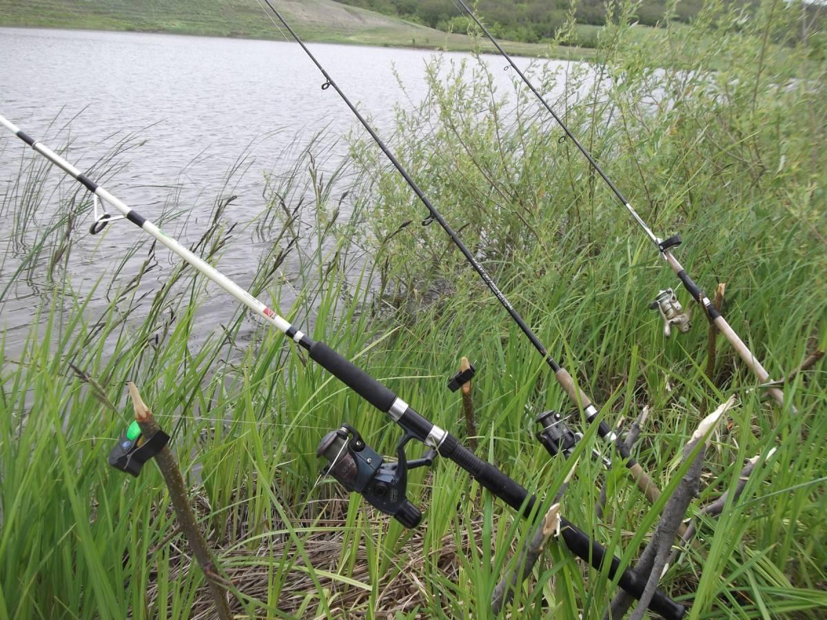 рыбалка белый амур насадки