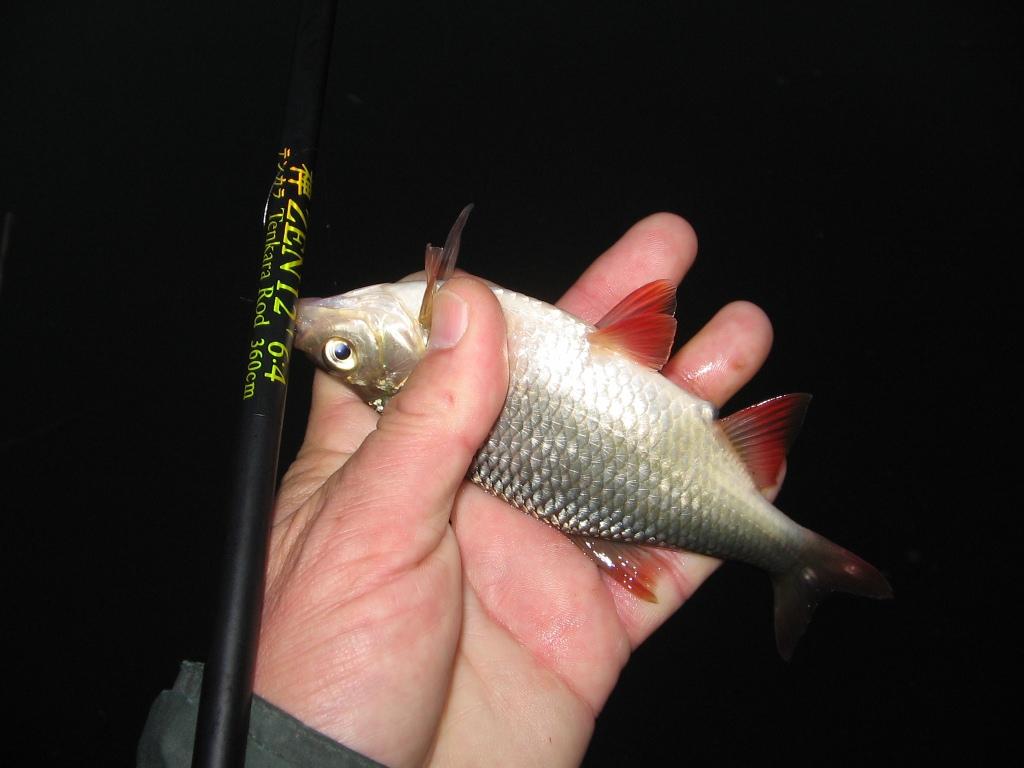 рыба хуже клюет