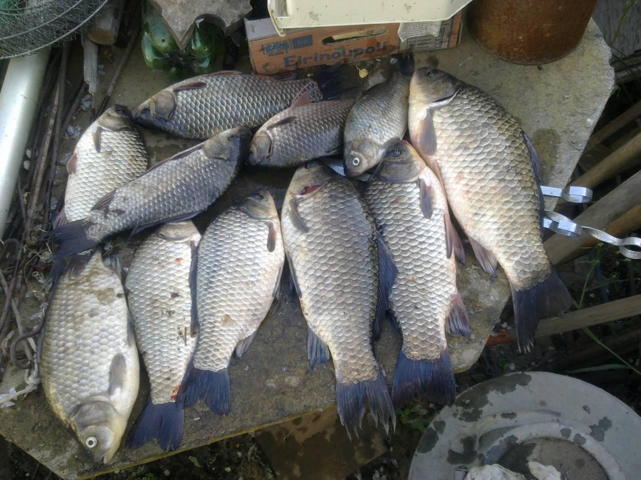Где камышине места для рыбалки камышинский район